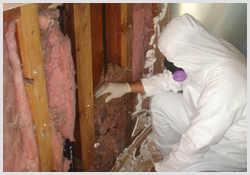 Mold Removal is common in San Diego