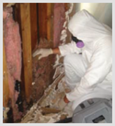 Mold Removal remediation